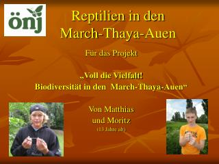 Reptilien in den  March-Thaya-Auen