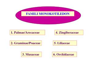 FAMILI MONOKOTILEDON