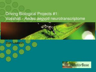 Driving Biological Projects #1: Vosshall -  Aedes aegypti  neurotranscriptome