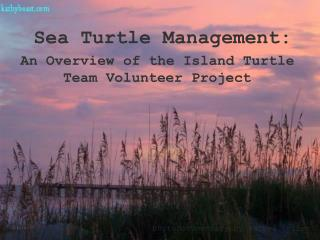 An Overview of the Island Turtle Team Volunteer Project