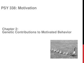 Chapter 2:  Genetic Contributions to Motivated Behavior