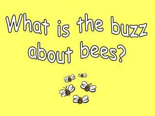What is the buzz about bees?