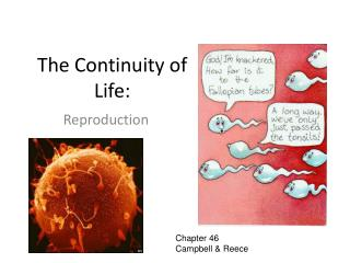The Continuity of Life: