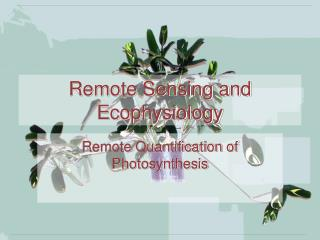 Remote Sensing and Ecophysiology