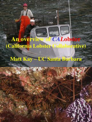 An overview of  CA L obster (California Lobster Collaborative) Matt Kay – UC Santa Barbara