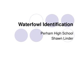 Waterfowl Identification