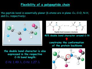 Flexibility of a polypeptide chain