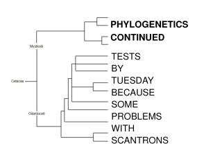 PHYLOGENETICS CONTINUED