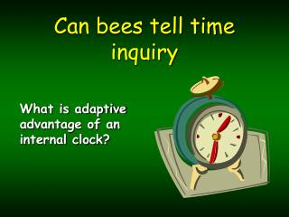 Can bees tell time inquiry