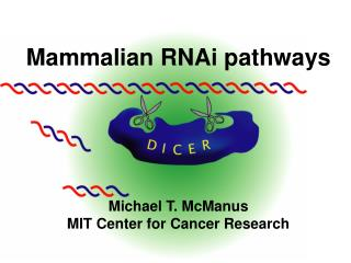Mammalian RNAi pathways Michael T. McManus MIT Center for Cancer Research