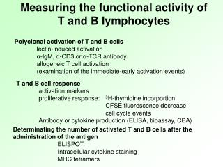 Measuring the functional activity of T and B lymphocytes