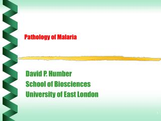 Pathology of Malaria