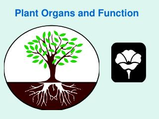 Plant Organs and Function