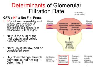 Determinants  of Glomerular Filtration Rate