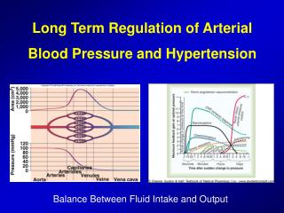 Long Term Regulation of Arterial Blood Pressure and Hypertension