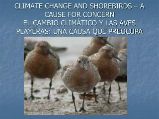 SHOREBIRDS ARE IN TROUBLE LAS AVES PLAYERAS SE ENCUENTRAN EN PROBLEMAS