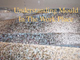 Understanding Mould In The Work Place