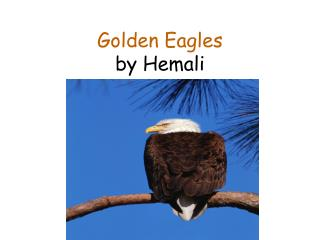Golden Eagles by Hemali