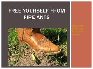 Free Yourself from Fire Ants