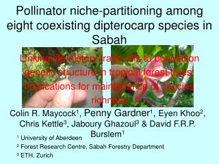 Pollinator niche-partitioning among eight coexisting dipterocarp species in Sabah