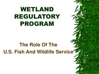 WETLAND REGULATORY PROGRAM