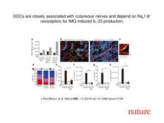 L Riol-Blanco et al. Nature 000 , 1-5 (2014) doi:10.1038/nature13199
