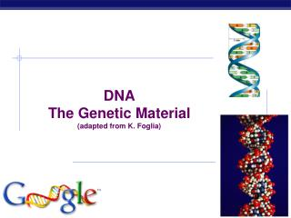 DNA The Genetic Material (adapted from K. Foglia)