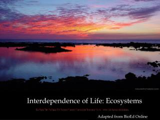 Interdependence of Life: Ecosystems