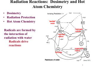 Radiation Reactions:   Dosimetry  and Hot Atom Chemistry