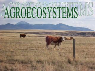 AGROECOSYSTEMS