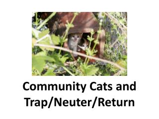 Community Cats and  Trap/Neuter/Return