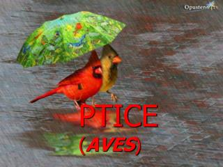 PTICE  ( AVES )
