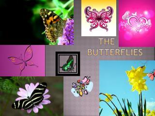 The cute butterflies