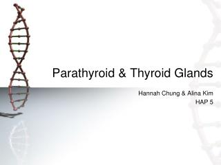 Parathyroid & Thyroid Glands