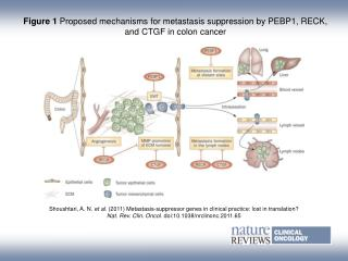 Figure 1  Proposed mechanisms for metastasis suppression by PEBP1, RECK, and CTGF in colon cancer