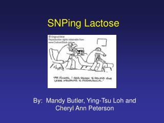 SNPing Lactose