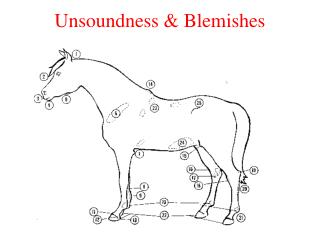 Unsoundness & Blemishes