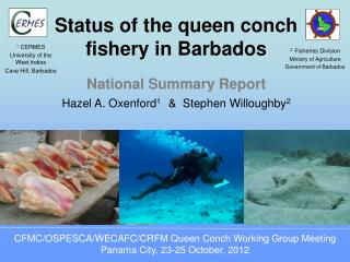 Status of the queen conch fishery in Barbados