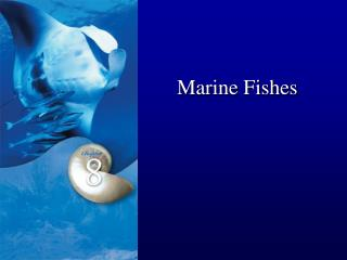 Marine Fishes