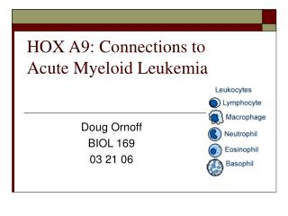 HOX A9: Connections to Acute Myeloid Leukemia