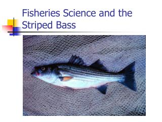 Fisheries Science and the  Striped Bass