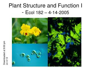 Plant Structure and Function I -  E col 182 – 4-14-2005