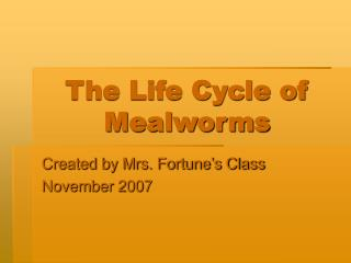 The Life Cycle of Mealworms