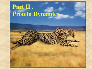 Part II . Protein Dynamics