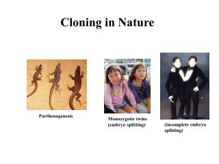 Cloning in Nature