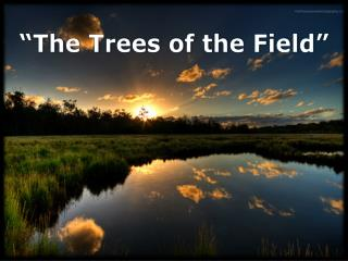 """The Trees of the Field"""