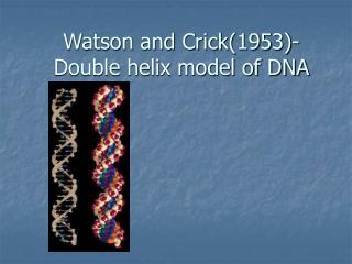 Watson and Crick(1953)- Double helix model of DNA