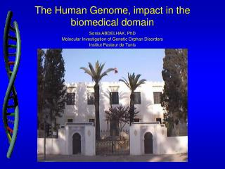 The  H uman  G enome ,  impact in the biomedical domain