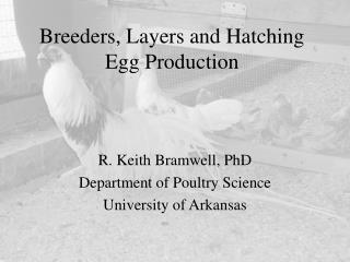 Breeders, Layers and Hatching Egg Production