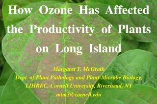 How  Ozone  Has  Affected  the  Productivity  of  Plants  on  Long  Island